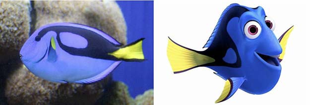 Palette Surgeonfish (Dory in Finding Nemo)