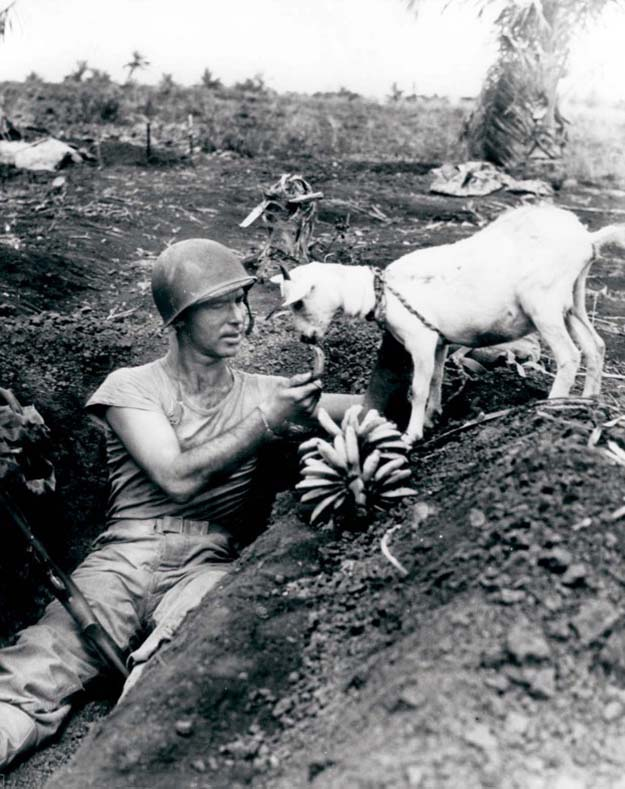 Sharing bananas with a goat during the Battle of Saipan, ca. 1944