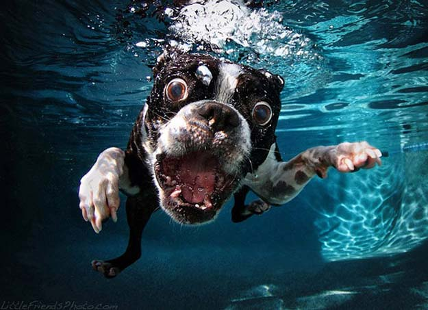 Awesome Underwater Dog Photography