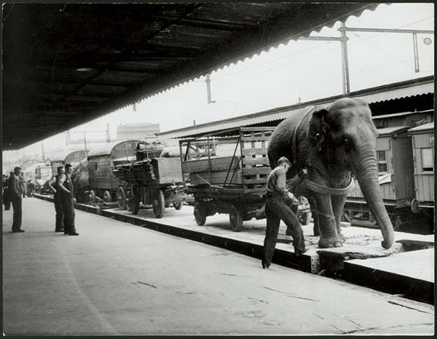 Wirths Circus arrives at platform 9, Spencer St. station in Melbourne, Australia
