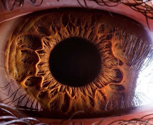 Damn Awesome Photography Of Eyes Of Different Species