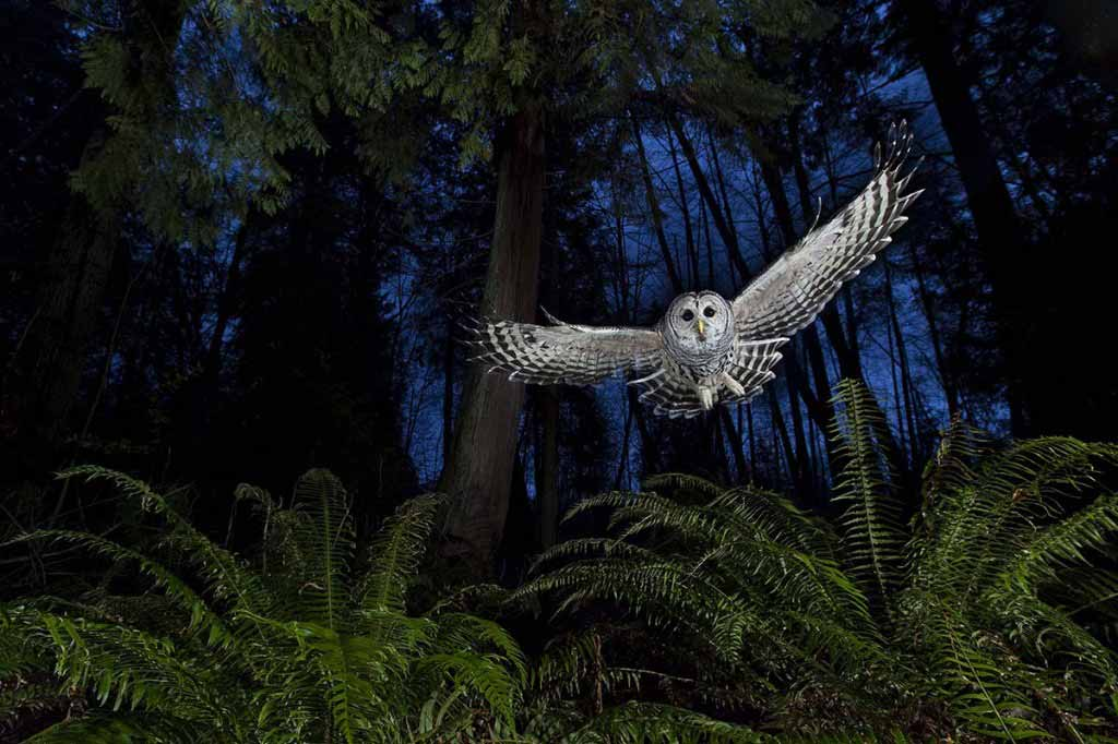 'The Flight Path'. Connor Stefanison/Wildlife Photographer of the Year