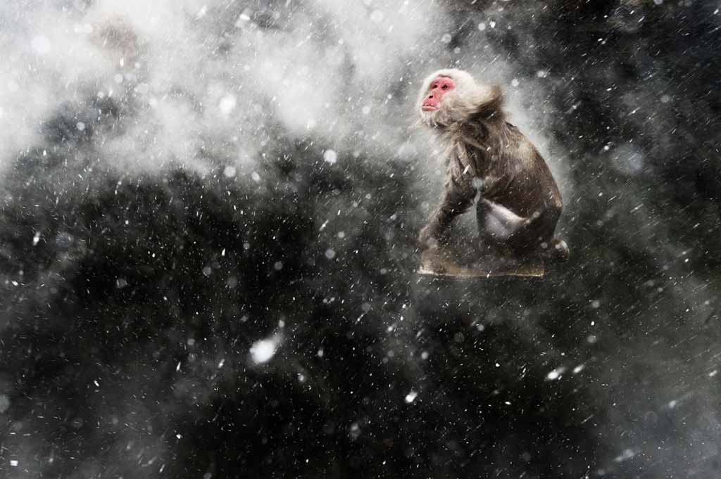 Snow Moment'. Jasper Doest/Wildlife Photographer of the Year