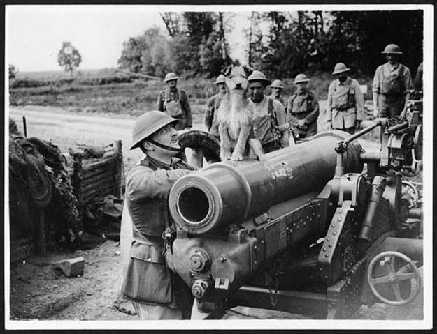 Triumphant dog sitting atop a gun surrounded by gunners, France, during World War 1