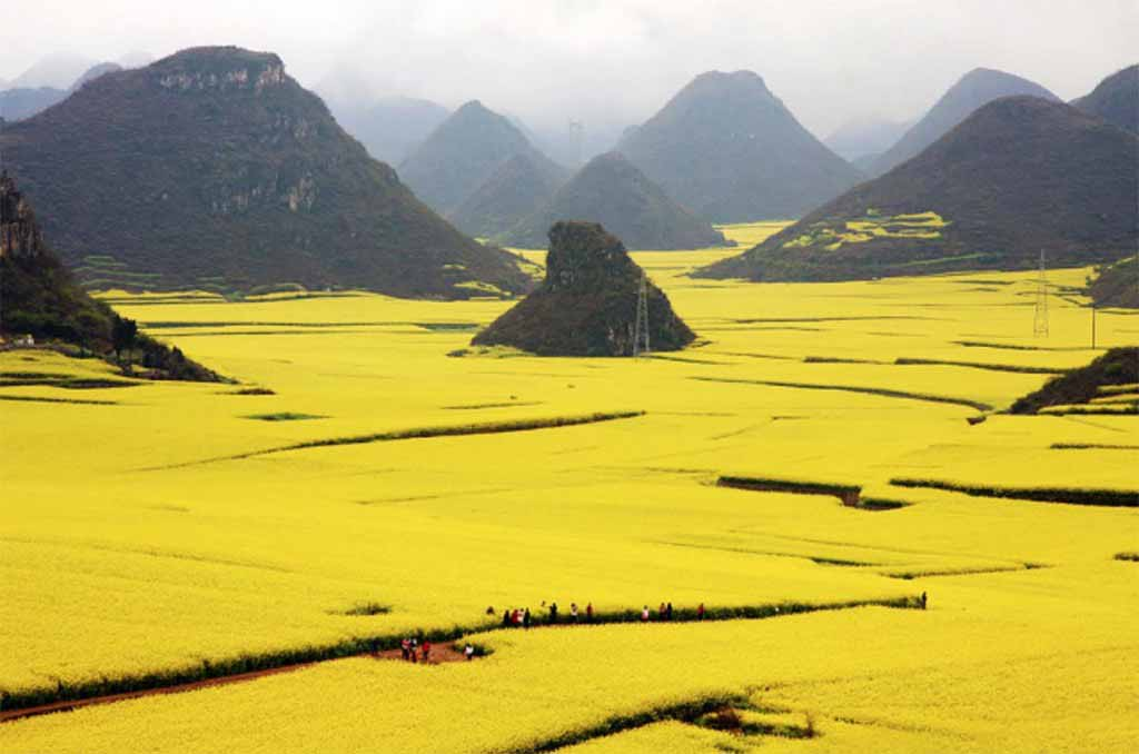 The Flower Ocean, Louping, China