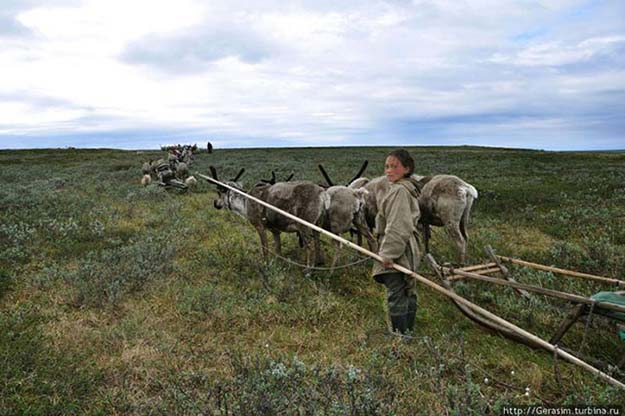 A Look Inside The Hunting And Gathering Life Of The Nenet People