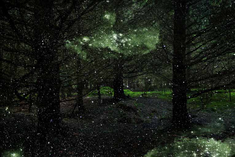 Stars in Forest Landscapes by Ellie Davies