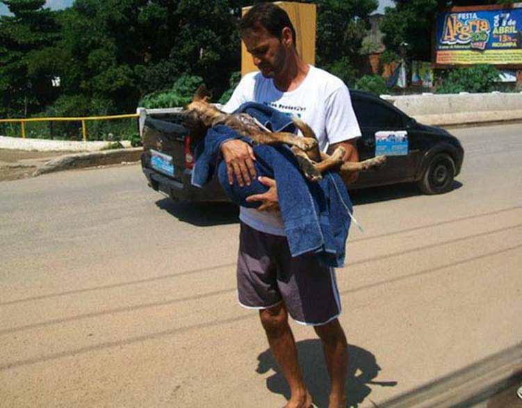 Stray dog found starved and maggot ridden is saved and nursed back health by his rescuer