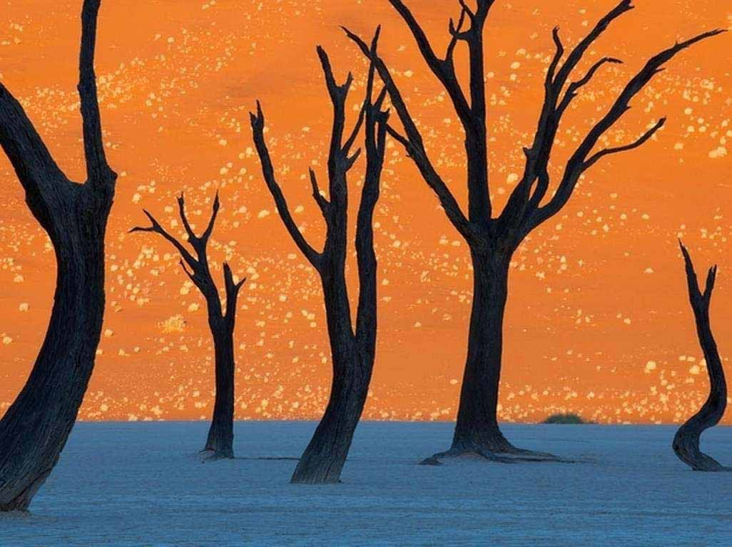 The camel thorn trees in Namibia, photographed here at sunrise
