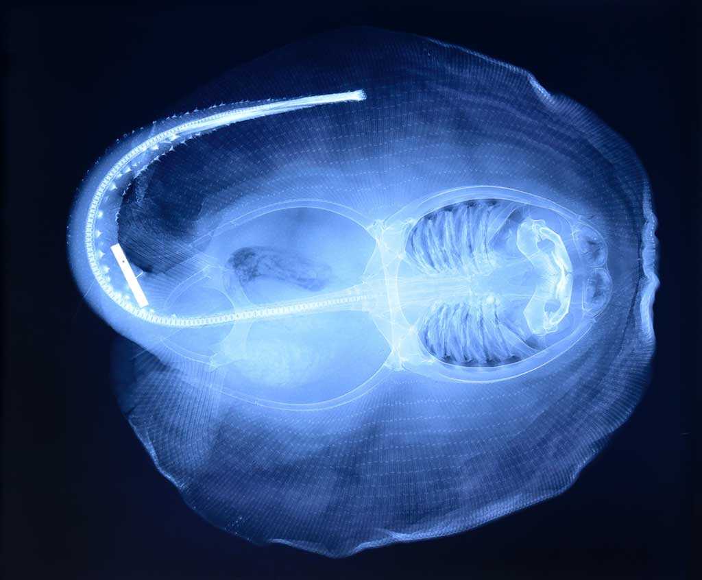 an x-ray of a stingray